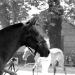 Ushiba profil Equestria 09