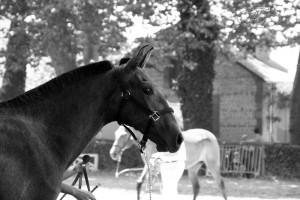 Ushiba, un an, Equestria à Tarbes 09